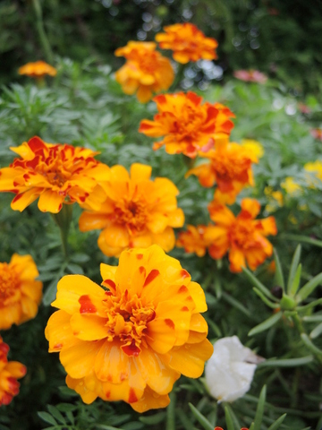 20210915-10_flower.JPG